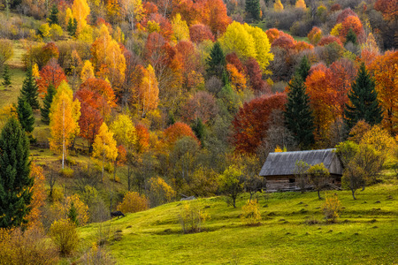 woodshed behind the fence on the hillside cowered with foliage near forest in autumn mountains