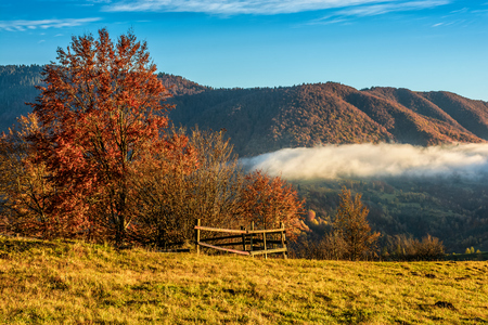 cold morning fog with golden hot sunrise in the Carpathian rural area. trees with red foliage near the fence on the hillside meadow