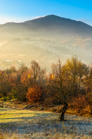 hillside with yellowed trees in morning fog. Mountain peak can be seen in the distance under clear morning sky