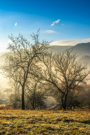 hillside with naked trees in morning fog. Mountain peak can be seen in the distance under clear morning sky