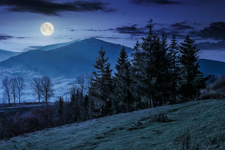 autumn slope of mountain range with spruce forest in bright morning light at night in full moon light