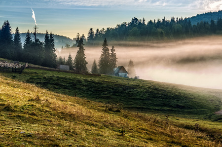 Rural landscape with flock of sheep on the hillside meadow in fog near the forest in mountains of Romania