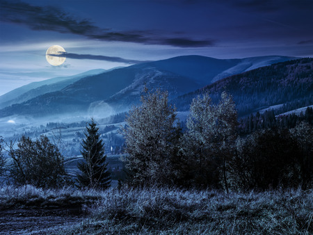 cold fog at night in the mountainous rural area. trees with foliage near the hillside meadow at night in full moon light Stock Photo