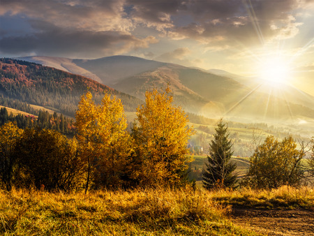 cold morning fog with golden hot sunset in the mountainous rural area. trees with Yellow foliage near the hillside meadow in evening light