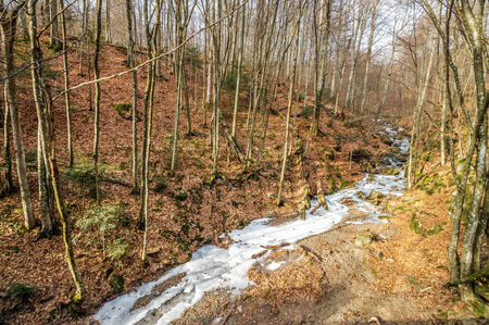 frozen river among forest with trees and foliage on the ground Stock Photo