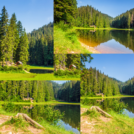 Summer landscape set of images. Spruce forest around the lake in mountains