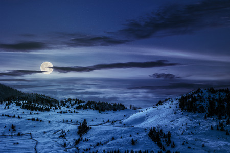 spruce forest on a meadow full of snow at night in full moon light