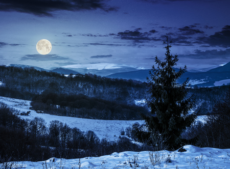 spruce forest on a meadow full of snow in high mountains with snovy tops at night in full moon light