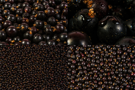 image set of black currant texture in different sizes Stock Photo