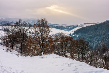 forest with some foliage on hillside with snow in mountain area in winter Stock Photo