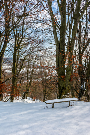 wooden bench in snow under tall trees with some red foliage on sunny winter day