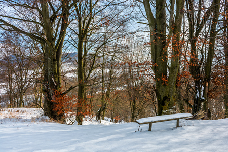 wooden bench in snow under tall trees with some red foliage on sunny winter day Stock Photo - 69535184