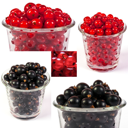image set of red and black currant in a glass in different sizes Stock Photo