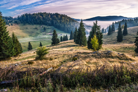 hillside with spruce forest among the fog on a meadow in mountains of Romania in morning light Stock Photo