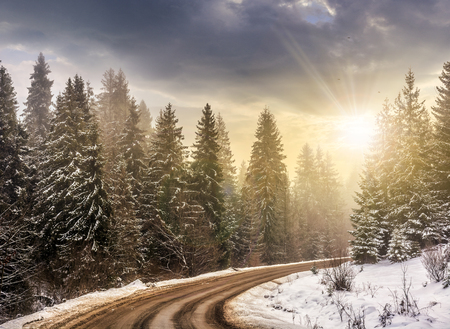winter mountain landscape. winding road that leads into the spruce forest covered with snow in evening light