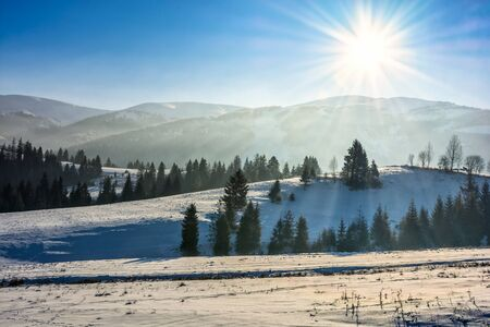 spruce forest on a meadow full of snow in mountains on a sunny winter day Stock Photo