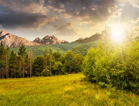 Composite image with spruce forest on a meadow  in Tatra mountains in evening light