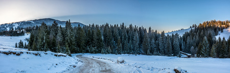 panoramic mountain landscape in winter. winding road that leads into the spruce forest on a snowy meadow Stock Photo