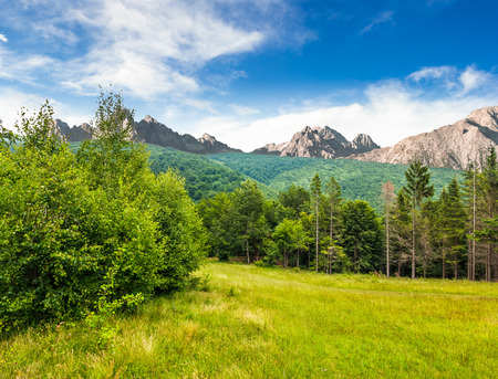 Composite image with spruce forest on a meadow  in Tatra mountains