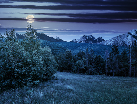 Composite image with spruce forest on a meadow  in Tatra mountains at night in full moon light