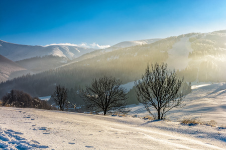 few naked trees on snowy hillside on foggy morning in winter mountains