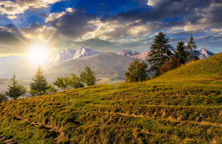 Composite summer landscape with spruce forest on grassy hillside in High Tatra Mountains in evening light Stock Photo