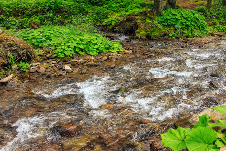 Mountain stream flow through ancient green forest in summer time Stock Photo