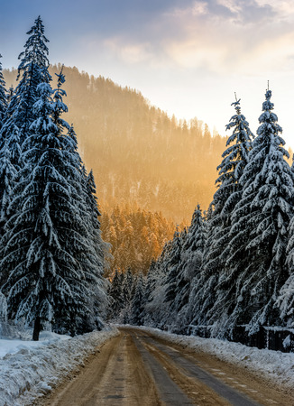 winter mountain landscape. road that leads into the spruce forest covered with snow in evening light Stock Photo