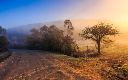 asphalt road in blue shade of a trees in mountainous rural area at foggy golden sunrise Stock Photo