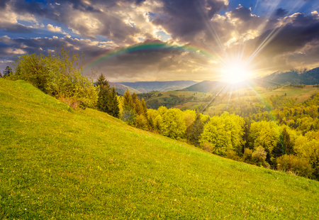 summer mountain landscape. hillside with trees on green grassy meadow under the rainbow in evening light