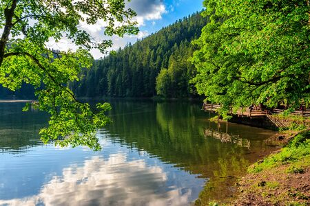 cloud reflection on Synevyr mountain lake in forest