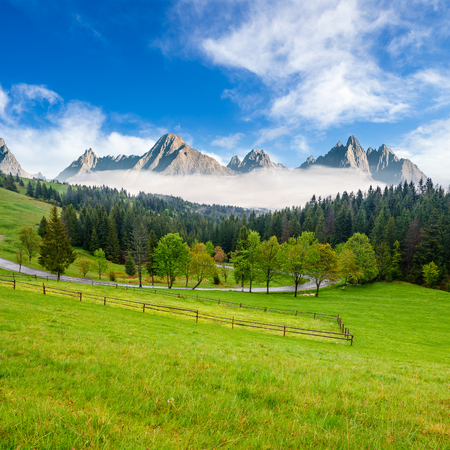 composite summer mountain landscape. rural valley with fence on a  grassy meadow. curve road goes to the spruce forest in front of a huge ridge with rocky peaks Stock Photo