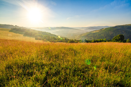 mountain summer landscape. meadow meadow with tall yellow grass and forests on hillside in morning light Stock Photo