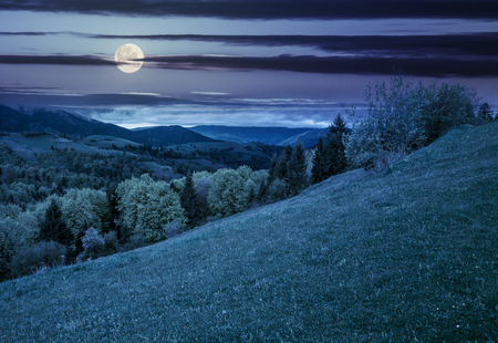 summer mountain landscape. hillside with trees on green grassy meadow at night in full moon light