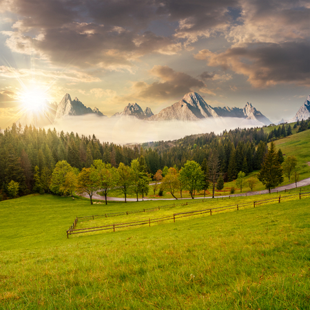 composite summer mountain landscape. rural valley with fence on a  grassy meadow. curve road goes to the spruce forest in front of a huge ridge with rocky peaks in evening light Stock Photo
