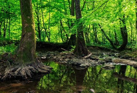 small stream with stones and fallen trees in the old green forest Stock Photo