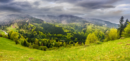 summer mountain landscape. hillside with trees on green grassy meadow near foggy mountains under overcast sky Stock Photo