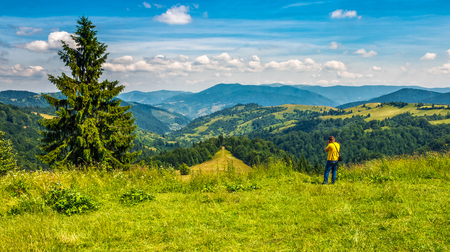 landscape photographer take pictures near the spruce tree on the edge of grassy hillside and looks on the mountain ridge
