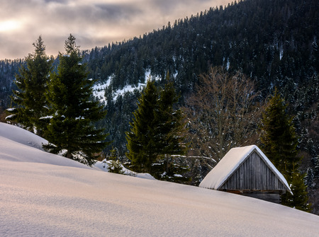 woodshed behind the snowy hill near spruce forest in winter mountains early in the morning