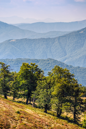 few trees on a hill side meadow in high mountains on a summer day Stock Photo