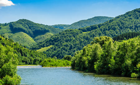 River flows among of a green forest at the foot of the mountain in picturesque nature of rural area in Carpathians  on a serene summer day under blue sky with some clouds