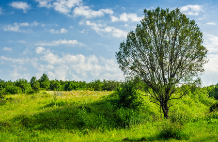 Trees on a meadow in rural area on beautiful summer day Stock Photo