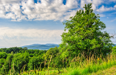 trees on a meadow in rural area on beautiful summer day