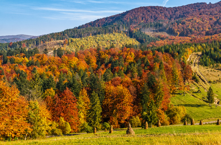 mountain rural area in autumn season. agricultural field with haystack on a hill near the forest with red foliage. beautiful and vivid landscape. Stock Photo