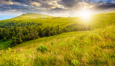 high mountain idyllic landscape. grassy meadow with forest on hillside. beautiful nature  at sunset