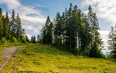 spruce forest on the hillside. sunny summer day with blue sky. beautiful landscape view Stock Photo