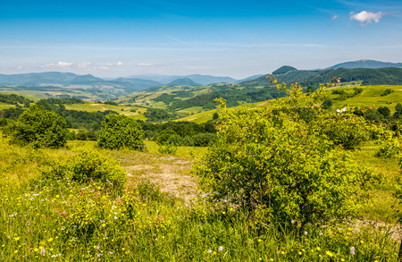 forest in mountain rural area. green agricultural field on a hillside. beautiful summer scenery in pleasant weather  Stock Photo