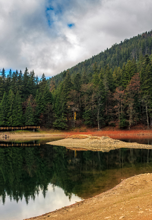 spruce forest on shore of the Synevir lake in Carpathian mountains. Warm Autumn day.