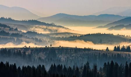 morning autumn landscape. fog among trees on hillside meadow. beautiful rural area in Carpathian mountains. Stock Photo