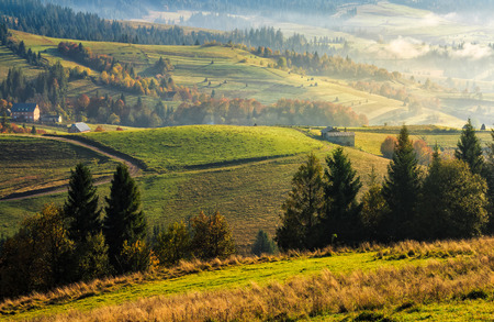 mountain rural area in autumn season. agricultural field in fog on a hill near the forest with red foliage. beautiful and vivid landscape. Stock Photo